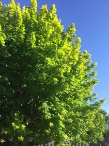 0 tree